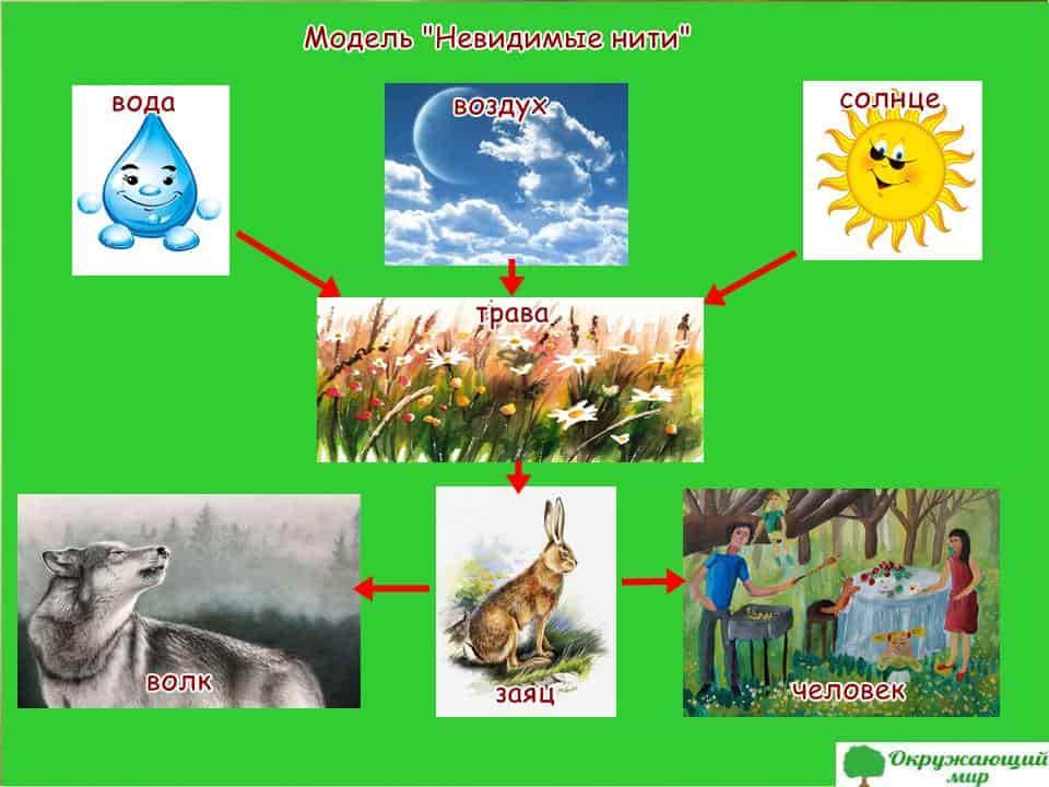 Обсуди какими способами можно показать связи между неживой и живой природой