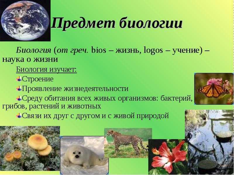 Взаимосвязи растений и животных в природе   План-конспект занятия по окружающему миру (2 класс) на тему:    Образовательная социальная сеть