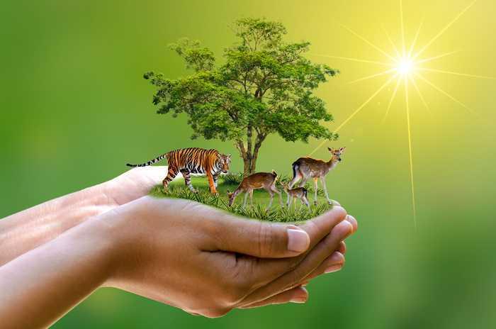 Что такое природная среда? Виды и характеристики природной среды ::