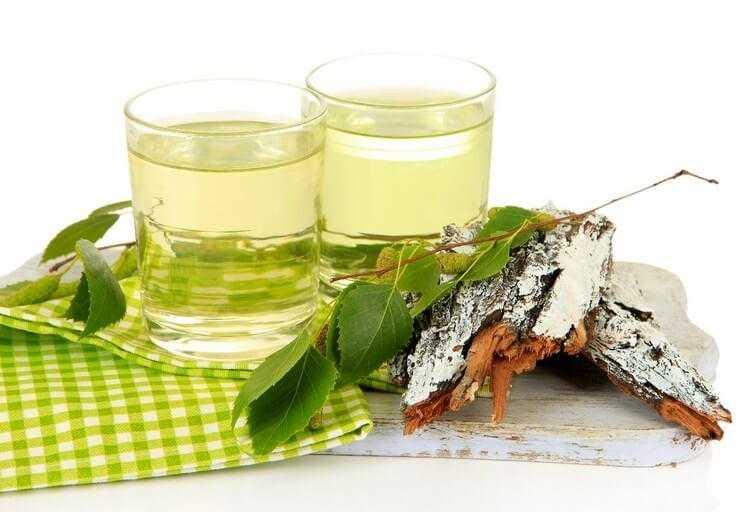 Березовые бруньки в народной медицине и алкогольной промышленности | Здоровая жизнь | Здоровье | АиФ Украина